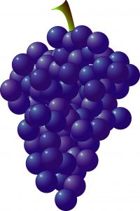 1132280_grapes
