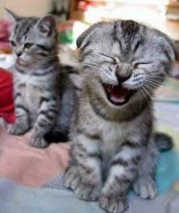 laughter-funny-cat-laugh