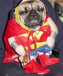 14-amazing-ridiculous-dog-costumes-1