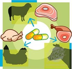 antibiotics-in-meat