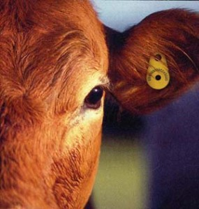 meat-livestock