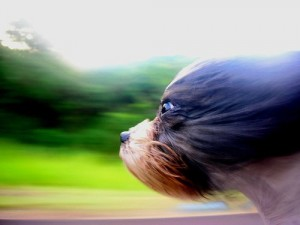 This is the type of movement that touches a dog's soul