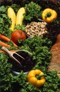 vegetarian-protein