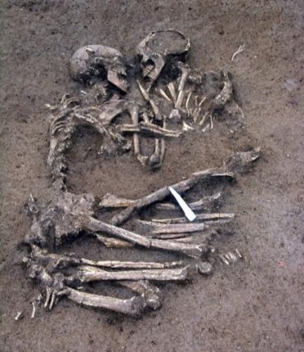 skeletonloversjpg