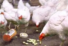 antibiotics-notext-ucs-001