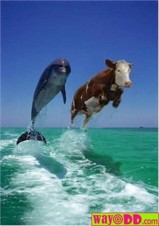funny-pictures-cow-jumping-aqY