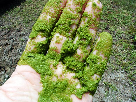 """The promise of algae may lead to a new mantra: """"Grow, Baby, Grow."""""""