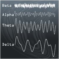 The different brain waves