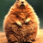 Is Groundhog's Day a Lesson in Living a Low Density Lifestyle?